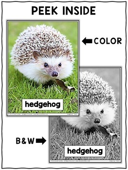 Close Reading Passage - Hedgehog Activities