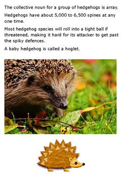 Hedgehog Handout