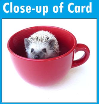 Hedgehog Matching Cards