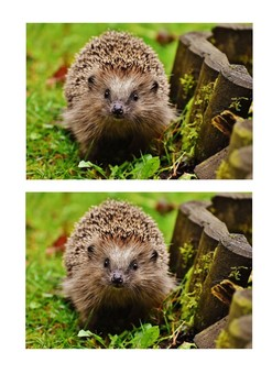 Hedgehog Picture Pack