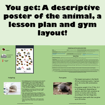 Hedgehogs and Porcupines: Physical Education Javelin Throw and Catching Game!