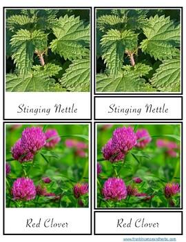 Herbal Nomenclature