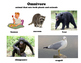 Herbivore, Carnivore, Omnivore Posters with Definition and Examples