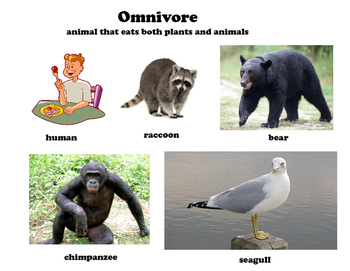 herbivore carnivore omnivore posters with definition and