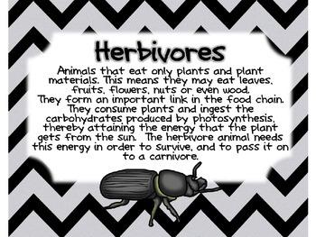 Herbivore, Carnivore, Omnivore Powerpoint
