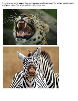 Herbivore, Carnivore, or Omnivore Sort
