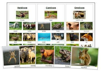Herbivores, Carnivores, and Omnivores: Cards & Chart