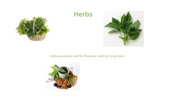 Herbs and Their Many Uses