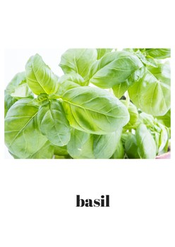 Herbs nomenclature cards