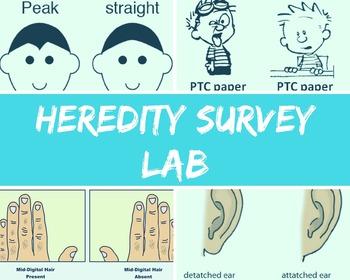 Heredity Class Survey Lab