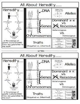 Heredity Foldable