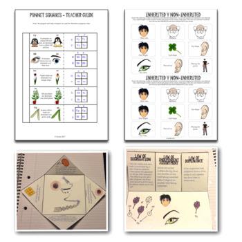 Heredity Genetics Interactive Notebook