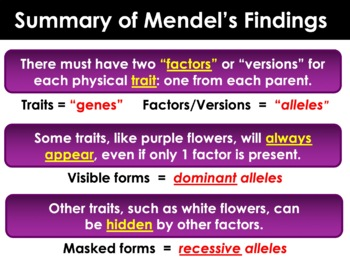 Genetics: Mendel, Heredity, Punnett Squares, DNA, Proteins