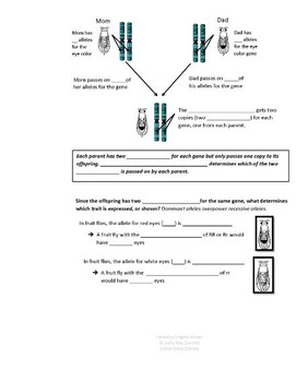 Heredity Graphic Notes