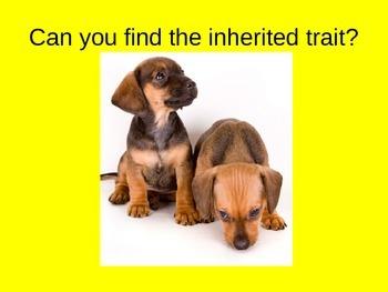 Heredity PowerPoint Presentation