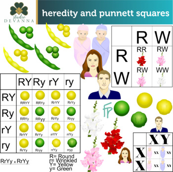 Heredity and Punnett Squares Clip Art