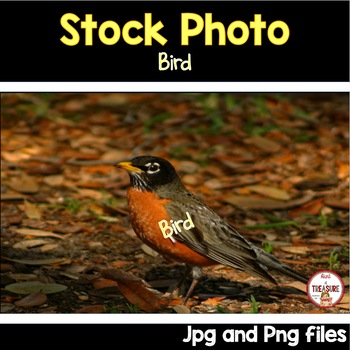 Bird Stock Photo- Animals