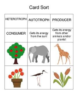 heterotroph and autotroph card sort by sciencesmartees tpt