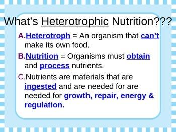 Heterotrophic Nutrition Powerpoint