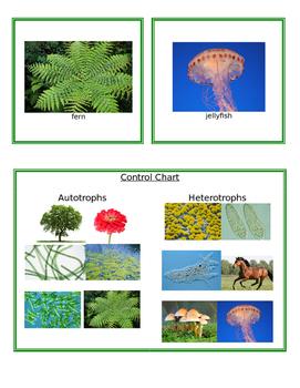 Heterotrophs and Autotrophs