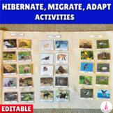Hibernate, Migrate, Adapt - Animal Sorting Activity. Animals in Winter