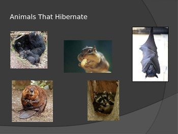 Hibernate, Migrate, and Adapt PowerPoint