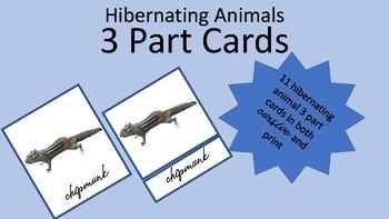 Hibernating Animals 3 Part Cards