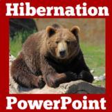 Hibernation | Kindergarten 1st 2nd 3rd Grade | PowerPoint