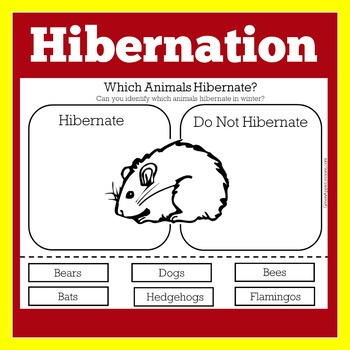 Hibernation Worksheet Teaching Resources Teachers Pay Teachers