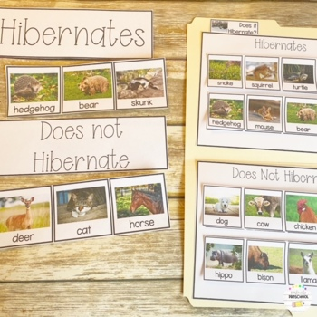 Hibernation Animal Sort