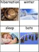 Hibernation: Informational Text and Writing Activity