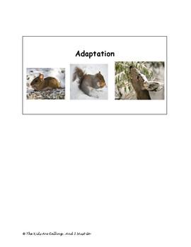 Hibernation, Migration, Adaptation Visual Cards