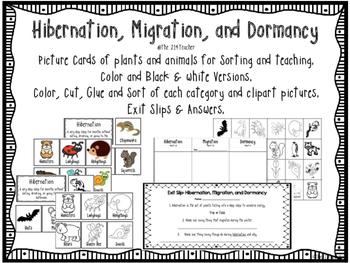 Hibernation, Migration, Dormancy Sorting Cards & Activities