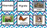 Hibernation vs. Migration Sort