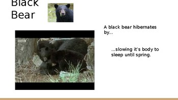 Hibernation Powerpoint
