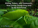 Hiding, Poison, and Teamwork - How Living Things Stay Safe in the Rainforest PDF