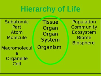 Hierarchy of Life PPT