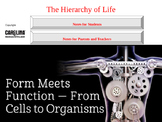 Hierarchy of Life PowerPoint