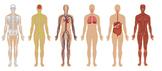 High School Biology Human Body Systems Unit Lesson