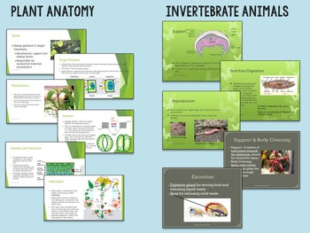 High School Biology PowerPoints for your Whole Course- EDITABLE
