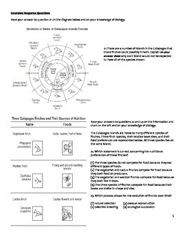 high school biology worksheet evolution by educator super store. Black Bedroom Furniture Sets. Home Design Ideas
