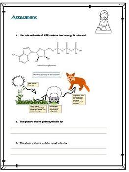 High School Life Science Biology-Cellular Respiration