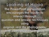 Hippo - Interactive PowerPoint presentation