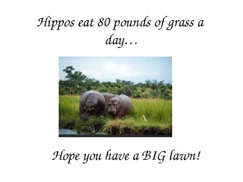 Hippo Powerpoint Lesson