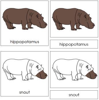 Hippopotamus Nomenclature Cards