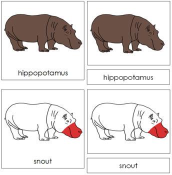 Hippopotamus Nomenclature Cards - Red