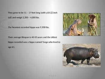 Hippopotamus - Power Point - Information Pictures History Facts