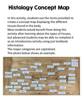Histology Activities: Tissues Concept Map & Epithelium Modeling