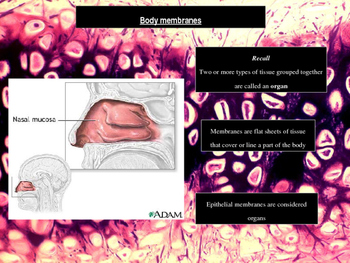Histology - Body Membranes