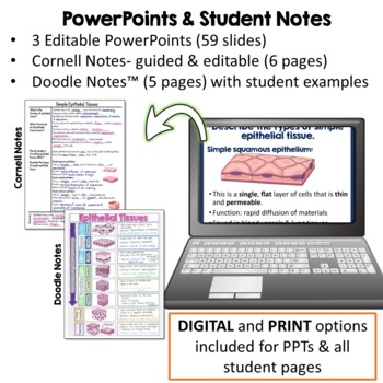 Histology: Tissues PowerPoint, Activities, Doodle Notes, & Quiz